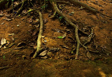 Roots and soil.Dry leaf. Roots and soil.Dry leaf to die .It is fertilizer nature Stock Images