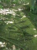 Roots som tar över banan Arkivfoton