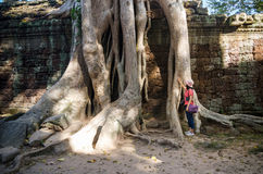 Roots of a spung on a temple in Ta Prohm royalty free stock photos