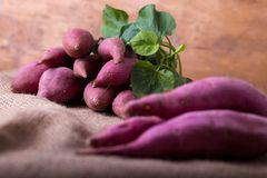 Roots of sweet potatoes Royalty Free Stock Images