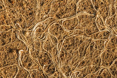 Roots tangle as clusters. Royalty Free Stock Photo