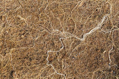 Roots tangle as clusters. Stock Image