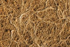 Roots tangle as clusters.Perspective view. Royalty Free Stock Photo