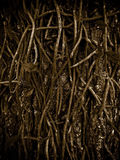 Roots Texture Royalty Free Stock Images