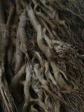 roots tree Στοκ Φωτογραφίες