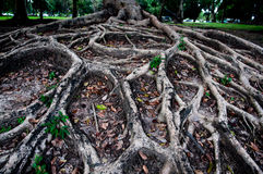 Roots tree show nature background Stock Images