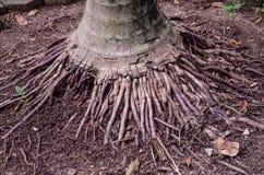 Roots tree. On Soil Stock Photo