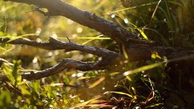 Roots of the tree in sun light stock video footage