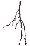 Roots tree Stock Photography