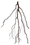 Roots tree Royalty Free Stock Photography