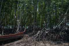 The roots of the trees and the boat. Peninsula of Railay. Krabi, Thailand. Royalty Free Stock Images