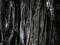Roots and treet background texture. Background texture made from roots and treet bark in the rain forest royalty free stock photography