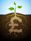 Pound sterling sign like root of plant Royalty Free Stock Photo