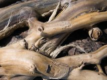Bleached driftwood on sandy beach. Roots and twigs, contorted branches royalty free stock images