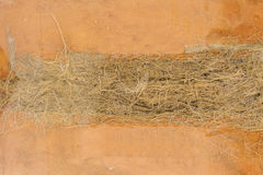 The roots of Vetiver Royalty Free Stock Images