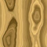 Rootwood big Royalty Free Stock Image
