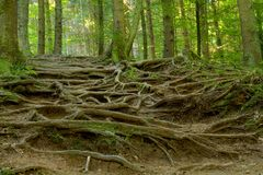 rooty bana Royaltyfri Bild