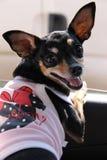 Ropa del perro Imagen de archivo libre de regalías