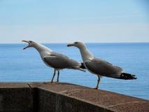 ropa för seagull Royaltyfri Foto