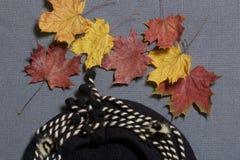 Ropa y accesorios del otoño Boina de lana Asperjado con las hojas de otoño coloridas en un fondo gris Foto de archivo libre de regalías