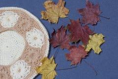 Ropa y accesorios del otoño Boina hecha punto Asperjado con las hojas de otoño coloridas en un fondo gris Imagen de archivo