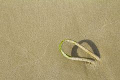 Rope on the beach royalty free stock photo