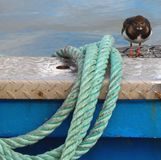 Rope and bird on boat royalty free stock image