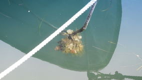 Rope from the boat with algae in the water,two shots stock video footage