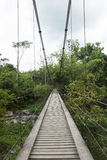 Rope bridge. In green forest Royalty Free Stock Photo