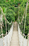 Rope bridge. Through  tropical forest Stock Photo