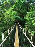 Rope bridge in the jungle. Rope bridge across the river in the jungle royalty free stock photos