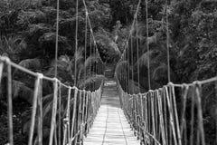 Rope bridge in jungle stock photography