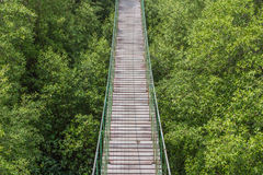 Rope bridge made from wood over the forest Royalty Free Stock Image