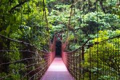 Rope bridge - Monteverde Cloud Forest Reserve. Red suspension bridge - Monteverde Cloud Forest Reserve - Reserva Biológica Bosque Nuboso Monteverde - Costa stock image