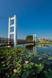 Rope bridge in Nhong na ri Phetchabun Stock Image