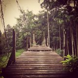 Rope bridge. Is the only path to destination royalty free stock photo
