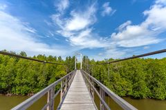 Rope bridge for walk through mangrove forest. Selective focus royalty free stock images