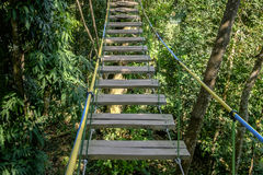 Rope bridge walkway through the treetops in a  forest Royalty Free Stock Photos
