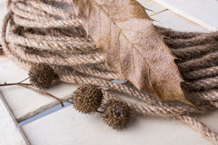Rope and brown pod capsule on a dry leaf as an autumn background Royalty Free Stock Photos