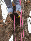 Rope Climbing in a Tree Stock Images