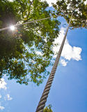 Rope for climbing trees. Stock Photos
