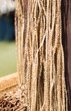 Rope from dry coconut Royalty Free Stock Image