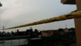 Rope. In evening yellow colour royalty free stock photo