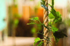Rope With Fake Plant Royalty Free Stock Image