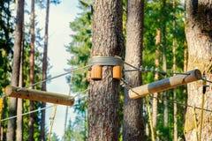 Rope fastenings around tree. In autumn day stock photo
