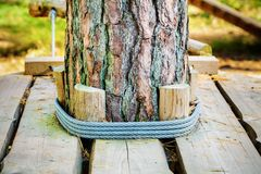 Rope fastenings around tree in park. In autumn day royalty free stock image