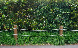 Rope fence in garden