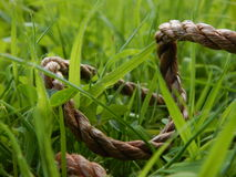 Rope Through Grass royalty free stock photo