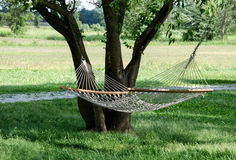 Rope hammock in the trees Royalty Free Stock Photo