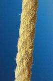 Rope of hemp Royalty Free Stock Images